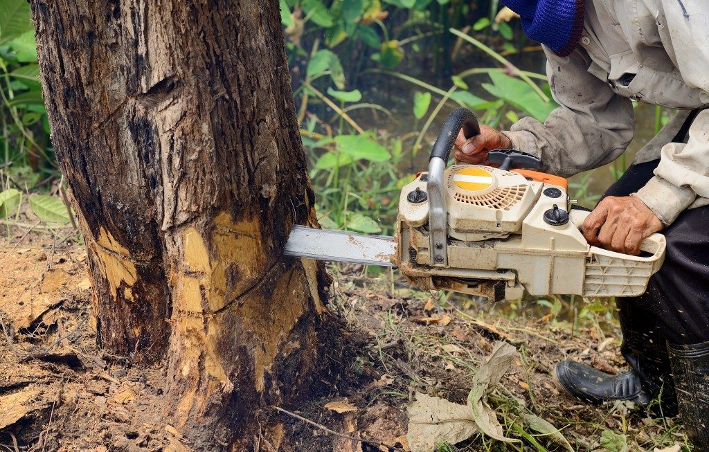 Man cutting a tree with a chainsaw